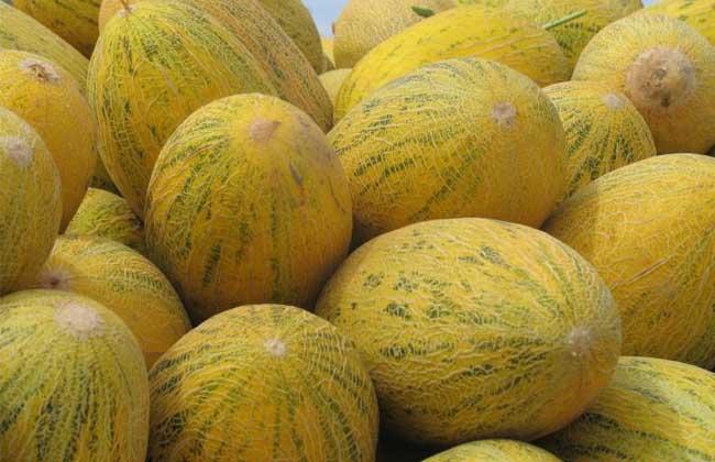 黄蛋子哈密瓜