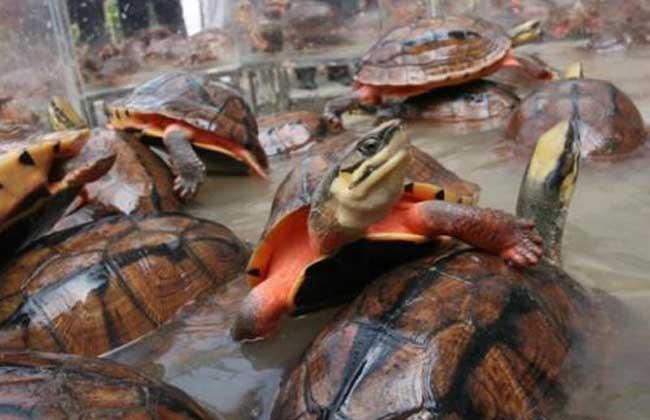 金钱龟吃什么食物