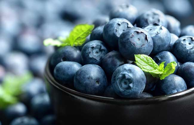 蓝莓品种图片