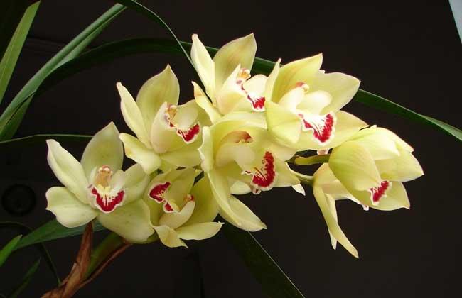 兰花的花语及象征意义