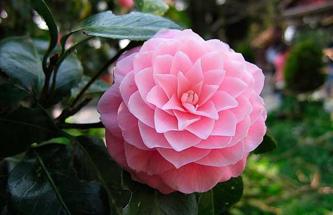 中国十大名花分别是哪些?