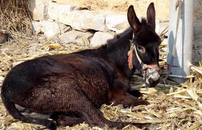 驴的养殖前景