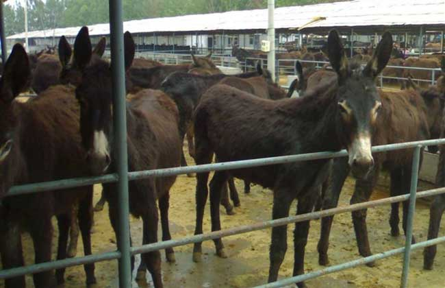 肉驴养殖场建设方法
