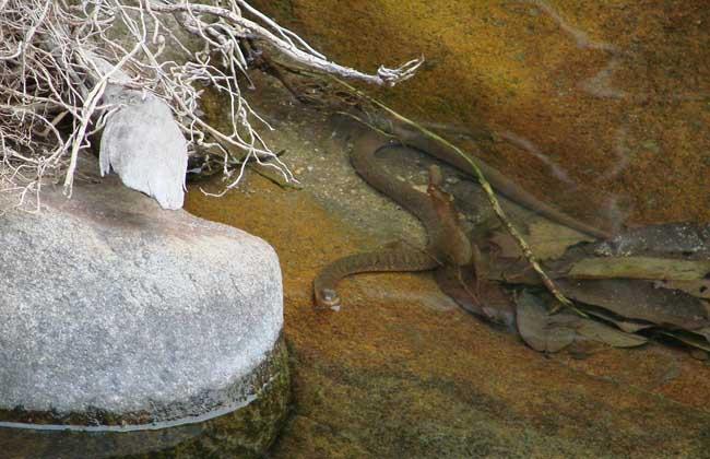 水蛇种类大全