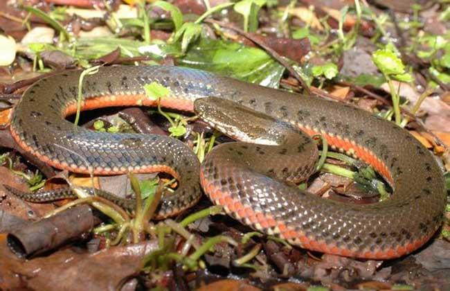 中国水蛇有毒吗