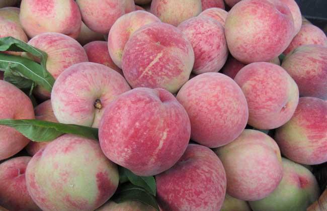 水蜜桃的功效与作用