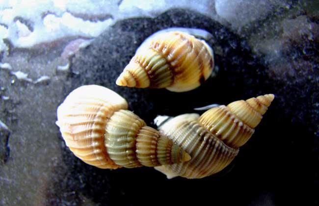 螺的常见种类