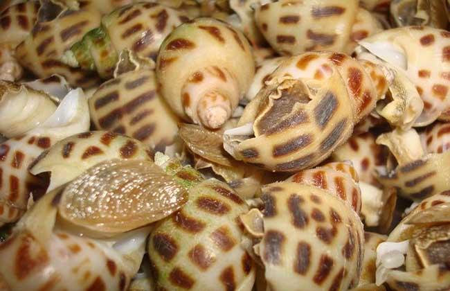 螺的种类图片大全