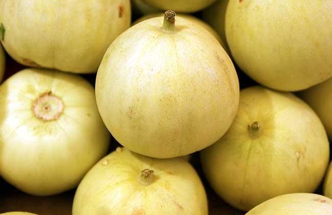孕妇能吃香瓜吗