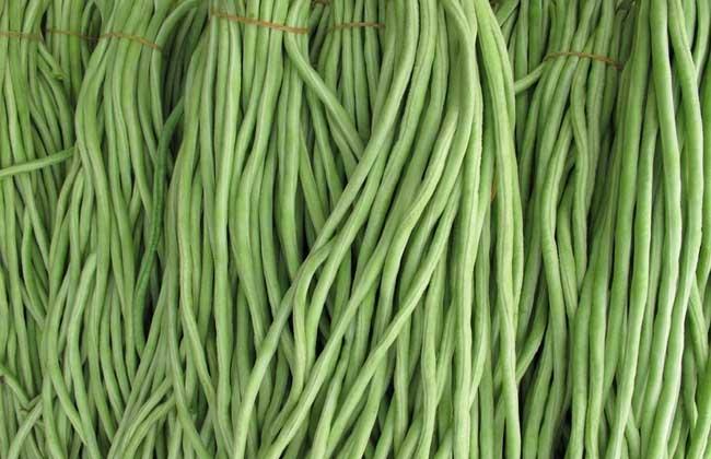 豇豆的营养价值
