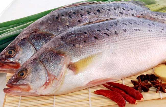 鲈鱼多少钱一斤