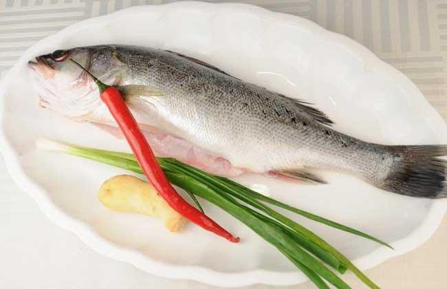 鲈鱼的营养价值