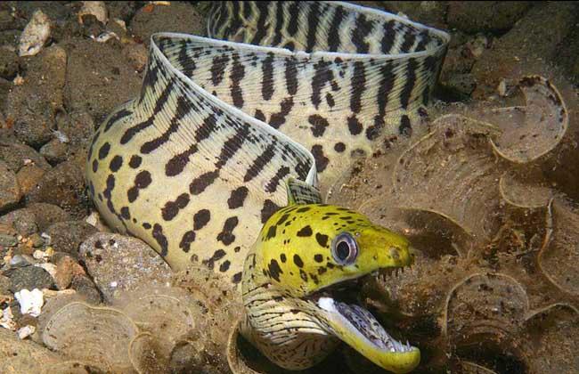 鳗鱼疾病防治技术