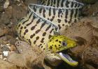 鳗鱼的产地分布