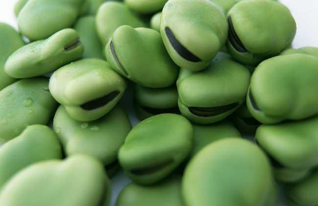 蚕豆真的有毒吗