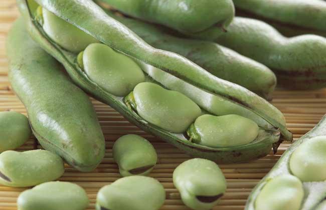 蚕豆有毒吗?