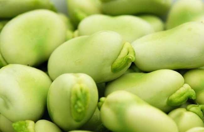 蚕豆有毒吗