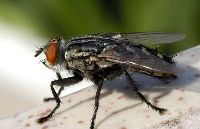 消灭苍蝇的办法