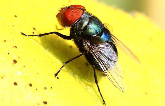 消灭苍蝇的最好办法