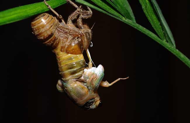 蝉一生的生长过程