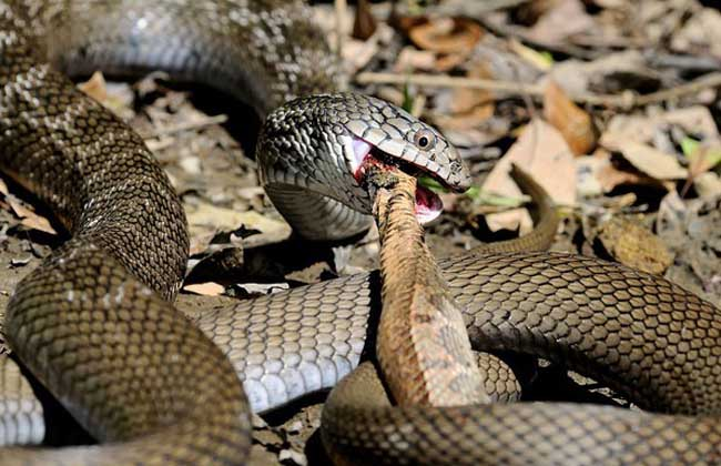 大王蛇能长多大
