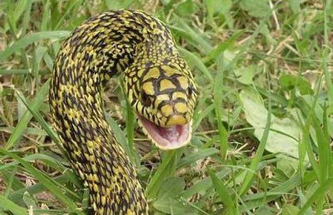 大王蛇的产地分布