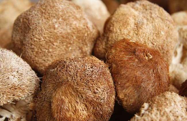 猴头菇的泡发方法