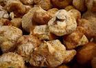 猴头菇的营养价值