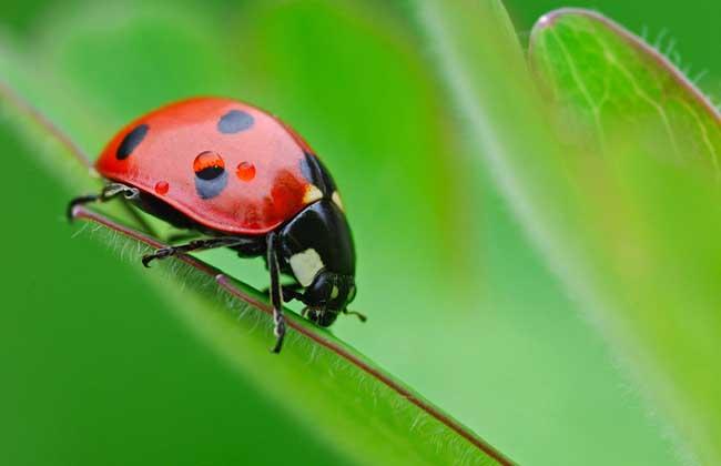 有益的昆虫都有哪些