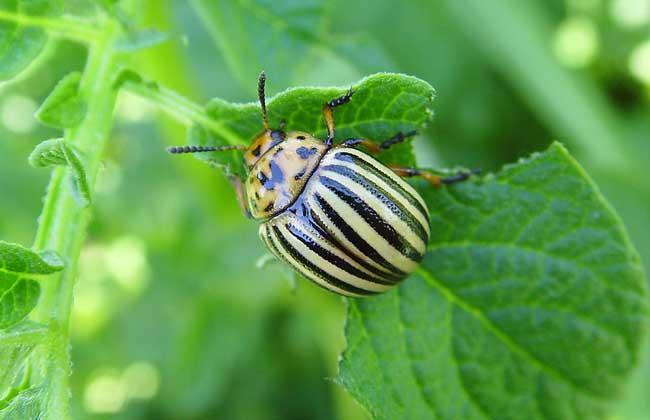 昆虫养殖项目有哪些
