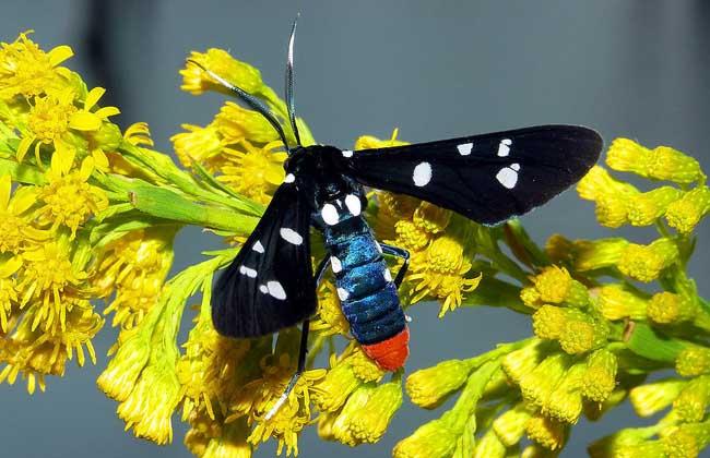 昆虫种类图片大全