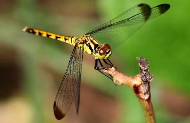 昆虫触角的结构