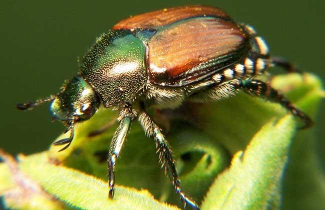 昆虫种类图片大全(4)