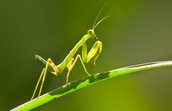 昆虫种类图片大全(5)