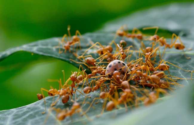社会性昆虫有哪些?