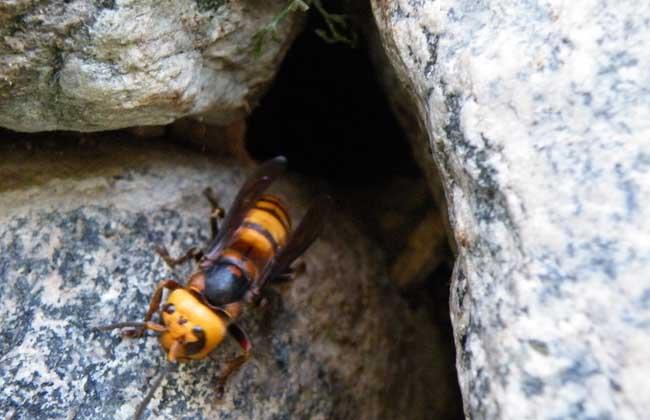 常见的昆虫养殖项目有哪些
