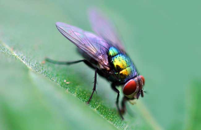 有害的昆虫有哪些?