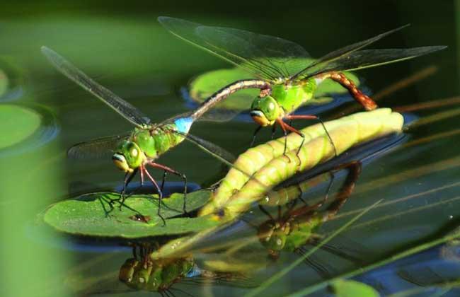 世界上现存十类最大的昆虫