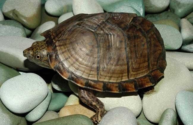 乌龟怎么养最好
