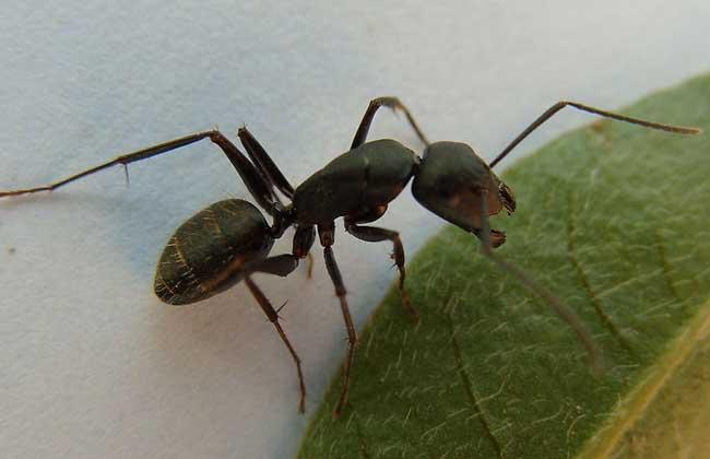 蚂蚁族群的职能分工