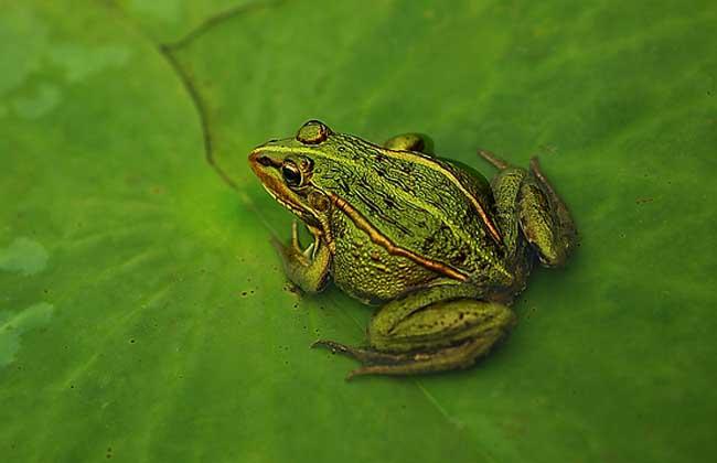 青蛙的生长过程