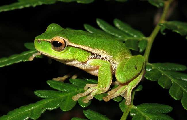 青蛙的资料大全
