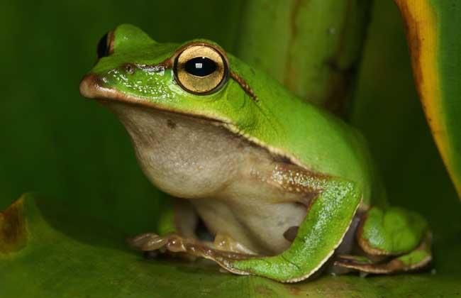 青蛙吃什么食物