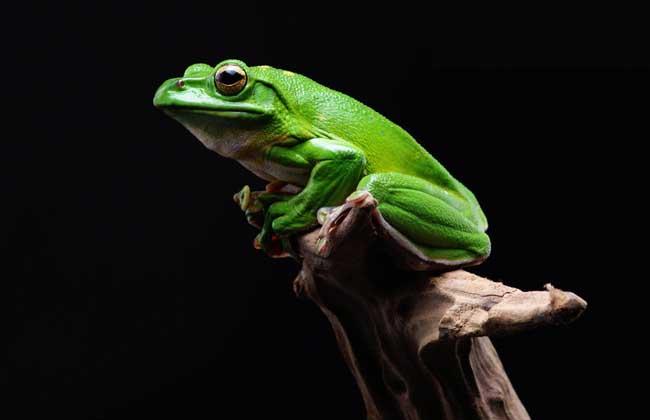 青蛙的生活环境