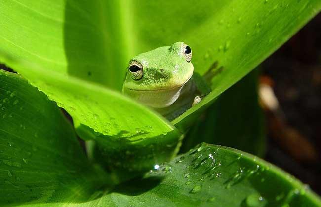 青蛙的视觉神经