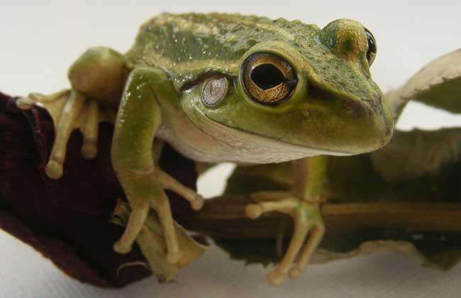 青蛙的形态特征
