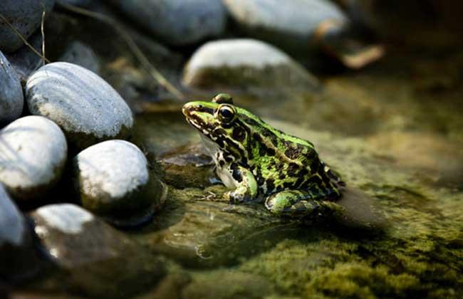 温水煮青蛙是什么意思