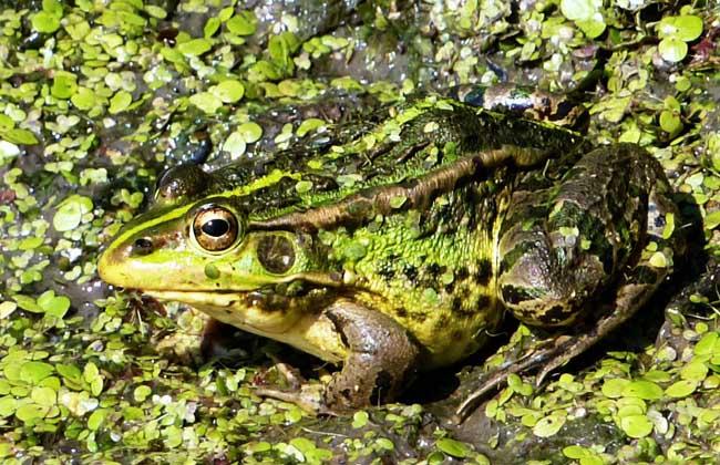 青蛙的孵化管理