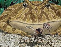 史前最大动物魔鬼蛙竟能吃恐龙