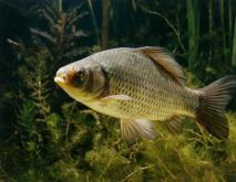 世界十大凶猛淡水鱼排行榜